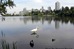 9 Stanley Park Beautiful British Columbia Photo By Thanasis Bounas